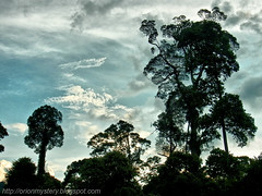 beautiful sunset in maliau basin R0012450 copy