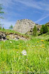 Un giglio per il Bec-de-Ratè (Valle di Champorcher, Parco Regionale del Mont Avic, Valle d'Aosta-Vallée d'Aoste) (Sisto Nikon - CLICKALPS PHOTOGRAPHER) Tags: summer sky panorama sun mountain lake mountains alps macro nature june clouds montagne trekking walking lago lights landscapes nikon nuvole estate hiking lac natura cielo luci sole giugno sentiero alpi paesaggi montagna paesaggio alpe valledaosta panorami itinerari sisto camminare granparadiso escursionismo escursione camminata valléedaoste alpigraie naturalistica sisti alpeggi dondena miserin montglacier tersiva rosadeibanchi montdelà parcoregionaledelmontavic valledichamporcher altavian°2 fenètredechamporcher