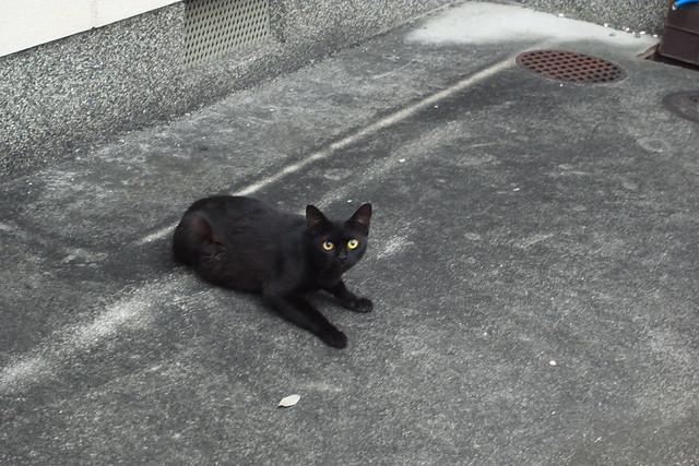 Today's Cat@2011-07-04