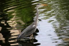 Monday morning (FabioMassetti) Tags: canon lago reflex italia sigma acqua brescia lombardia animalplanet animale mondaymorning lunedmattina