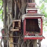 "Small Shrines in Tree <a style=""margin-left:10px; font-size:0.8em;"" href=""http://www.flickr.com/photos/14315427@N00/6930260918/"" target=""_blank"">@flickr</a>"