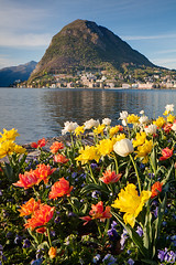 San Salvatore - Parco Ciani - Lugano - Switzerland (Nonac_eos) Tags: park flowers lake sunrise switzerland spring tulips financialdistrict shore lakeshore conventioncenter lugano municipalpark tilting tiltshift congresscenter ceresio dephtoffield greenlung parcocivico parcociani focusplane canontse24mmf35lii