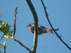 Robin (Joe Cleere) Tags: sky orange bird wet robin branch wetbird smallbird
