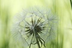 fleur 55 (Ben Piaget) Tags: flowers flower macro nature fleurs canon ben bokeh lumire flou plantes flore couleure piaget proxi couleures awesomeblossoms