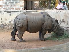 Rhino at Nandankanan, Bhubaneswar, Odisha (Prasanta Kumar Mohanta) Tags: elephant monkey alligator crocodile cablecar whitetiger bhubaneswar nandankanan royalbengaltiger odisha nandankanzoologicalpark