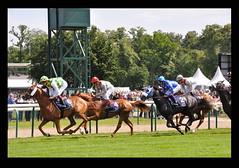 En course... (Guillaume Cattiaux) Tags: horse france sport nikon europe jockey longines chantilly courses d90 cheveaux cheveau coursehippique prixdianedelongines