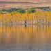 Fall+Colors%2C+Colorado