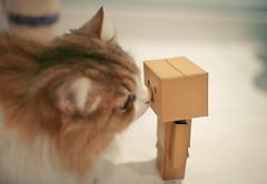 kiss* danbo (iamcjun) Tags: cat canon toy 50mm kiss warm danbo 5dmkii iamcjun 家猫写真