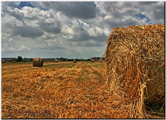A Golden Harvest (krisdecurtis) Tags: light sky italy panorama nature field clouds canon spectacular landscape gold italia 300d campania canon300d wheat harvest kris campo paesaggio masterpiece grano capua marvels 2011 maddaloni raccolta meravigl