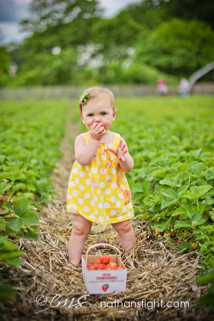 strawberry picking 2011 -_-10