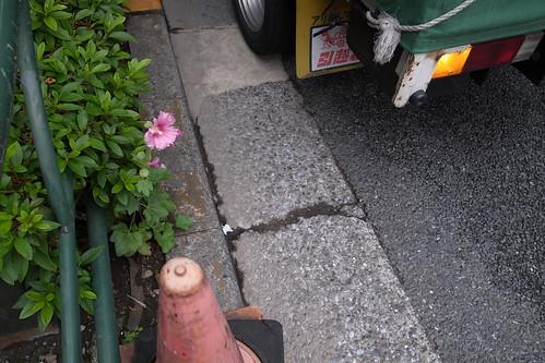 東京の花 2