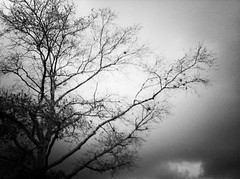 8/365- Before the storm (elineart) Tags: camera white storm black tree clouds branches creepy spooky 365 darkclouds iphone 365daysproject iphoneapps iphonography elineart swankolab