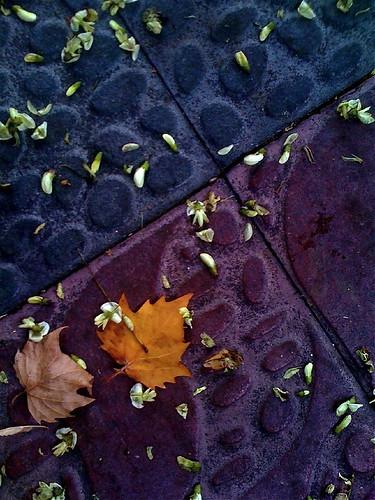 Suelo con hojas y flores by JoseAngelGarciaLanda
