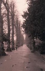 Dane John Gardens (Keith Marshall) Tags: uk trees england mamiya film gardens 35mm vanishingpoint kent kodak path deluxe super canterbury 200 epson rodinal avenue selfdeveloped danejohn v500 adox colorplus aph09 adolux mamiyasuperdeluxe 15min150