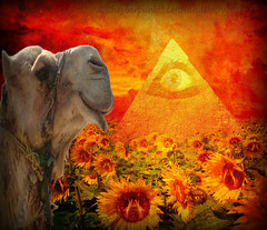 'EGYPTIAN DREAMS!' {with My Eye & 19 Hidden ethyl's & 2 Hidden Fiends!} (Cheyberpunk!) Tags: 2 sky 3 eye strange skulls skull surreal dreaming hidden odd camel sunflowers egyptian dreams april pyramids trippy 19 bizarre fiends 2012 mii lefthandpath my ethyls cheyberpunk