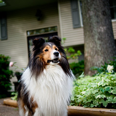 Yogi (echofeathercanyon) Tags: portrait dogs pen spring bokeh olympus panasonic yogi 45mm ep1 ep2 ep3 m43 microfourthirds