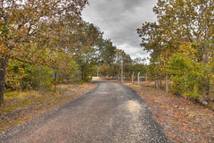 Road on the forest (kukulb) Tags: road alley forest hdr tree sky peaceful landscape path nature