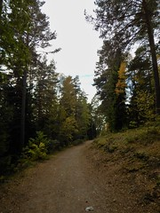 Road leading from parking lot to Lvnsbadet at the lake Yngern (Flicker Classic Person) Tags: yngern lvnsbadet beach strand naturist nudist fkk sdertlje nykvarn sweden sverige safe 2016 road forest trees