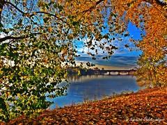 A touch of autumn (googleschorsch) Tags: autumn herbst licht sonnenuntergang sunset flus river water wasser brcke bridge googleschorsch ladenburg