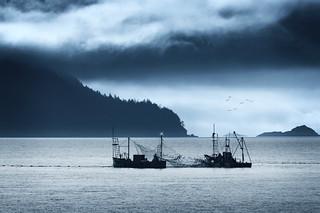Reefnet Salmon Fishing