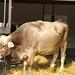 Campus Farm 10- 15 Nov 2010