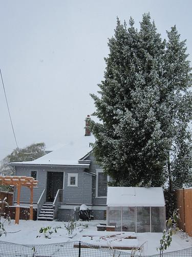 November Snow 2010 031