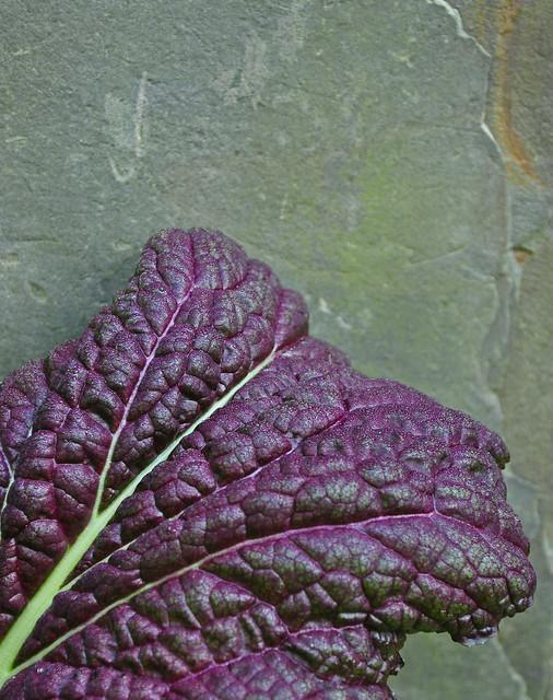 Brassica juncea var. rugosa (2)