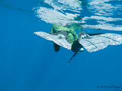 P1020503 (eputigna) Tags: ocean blue beach water mar fishing florida hunting palm atlantic freediving fl breathe pesca hold apnea spear spearfishing océano speargun submarina subaquea