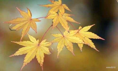 un poco más de otoño 25-11-2010 18-33-26