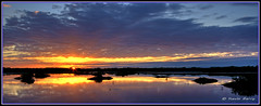 Autumn Sunrise (Kevin B Photo) Tags: morning autumn trees light red sky panorama orange usa cloud sun plant color reflection bird fall nature wet water beautiful beauty birds silhouette horizontal clouds america sunrise reflections landscape photography colorful solitude day alone exterior unitedstates feeding florida cloudy native south scenic dramatic calm southern daytime fl avian wading herons wetland egrets serenitynow kevinbarry merrittislandnationalwildliferefuge wowiekazowie colourlicious