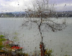 rain through the window (Tulay Emekli) Tags: autumn trees sky lake fall rain boats restaurant branches raindrops ankara mogan throughthewindow heavyrain glba mogangl lakemogan thedaymysongotanewjob celebrationoftheevent