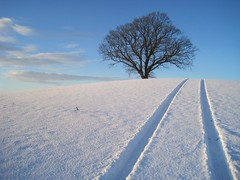 Silk Cut (ambo333) Tags: uk trees england snow tree ice frozen frost tracks freeze cumbria cumberland brampton churchfarm uksnow oldchurchlane irthington frozenbritain oldchurchfarmbrampton