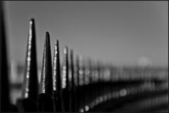 Lines 043/365 (Alucardo) Tags: blackandwhite david france photography marseille photographie dof thomas 365 railings project365 bokehlicious thomasdavid mokeh defi365 thomasdavidphotography thomasdavidphotographie