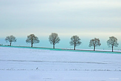 Cold Morning (dorena-wm) Tags: schnee trees winter snow tree bume baum trkis abigfave schneefang mygearandmepremium mygearandmebronze mygearandmesilver mygearandmegold dorenawm mygearandmeplatinum mygearandmediamond mygearandmeplatinium