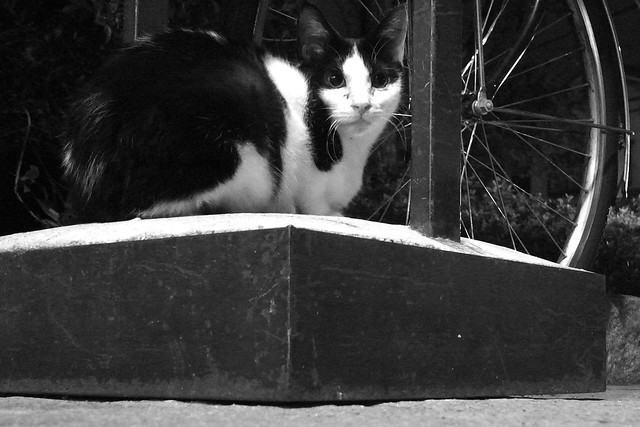 Today's Cat@2010-12-06
