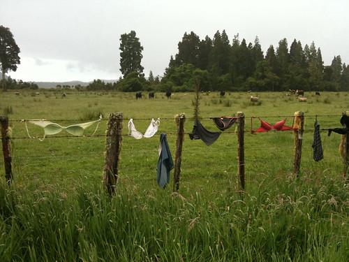 雨の降る牧場に大量のブラジャーが…