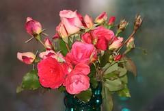 Victorian Romance (bigbrowneyez) Tags: pink blue roses stilllife greenleaves green love nature beautiful garden moody artistic bokeh rich victorian romance sparkle romantic bouquet blush delicate mygarden coldweather arrangement delightful warmfeeling victorianromance