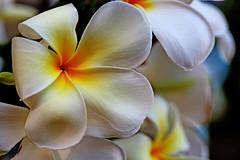 The light is white (xeno(x)) Tags: flowers white macro nature canon garden backyard asia 2010 xeno 5d2
