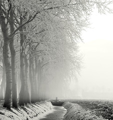 Frosty (Danil) Tags: winter white mist black cold holland tree ice netherlands fog rural landscape daniel nederland frosty freeze groningen landschap sloot boerderij d300 rijp adorp