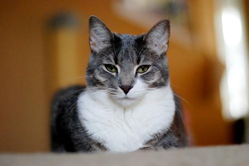 v cats 009