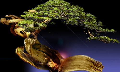 """Bonsai 072 • <a style=""""font-size:0.8em;"""" href=""""http://www.flickr.com/photos/30735181@N00/5261330445/"""" target=""""_blank"""">View on Flickr</a>"""