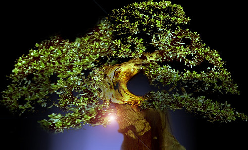 """Bonsai 093 • <a style=""""font-size:0.8em;"""" href=""""http://www.flickr.com/photos/30735181@N00/5261931856/"""" target=""""_blank"""">View on Flickr</a>"""