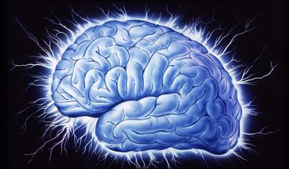 brain_420px