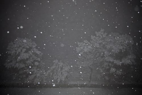 フリー写真素材, 自然・風景, 雪, 樹木, モノクロ写真, イタリア,