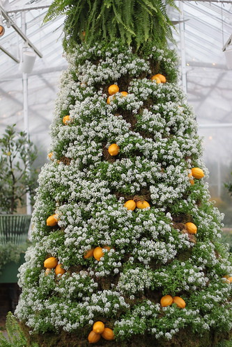 Alyssum and Orange Christmas Tree
