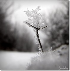 (Sarah-Vie) Tags: winter snow ice hiver neige glace flocondeneige iceform