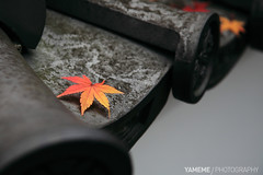 Maple, Kyoto (yameme) Tags: travel japan canon eos maple kyoto  kansai    flickraward 5dmarkii flickraward5