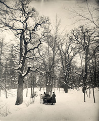 Djurgrden park, Stockholm, Sweden (Swedish National Heritage Board) Tags: winter snow tree forest riksantikvariembetet theswedishnationalheritageboard