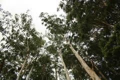 Kundala Dam - 3 (anoop_gkris) Tags: trees lake dam kerala reservoir tall munnar kundala setuparvatipuram