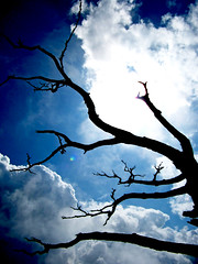 Blue Sky, Tree Branches